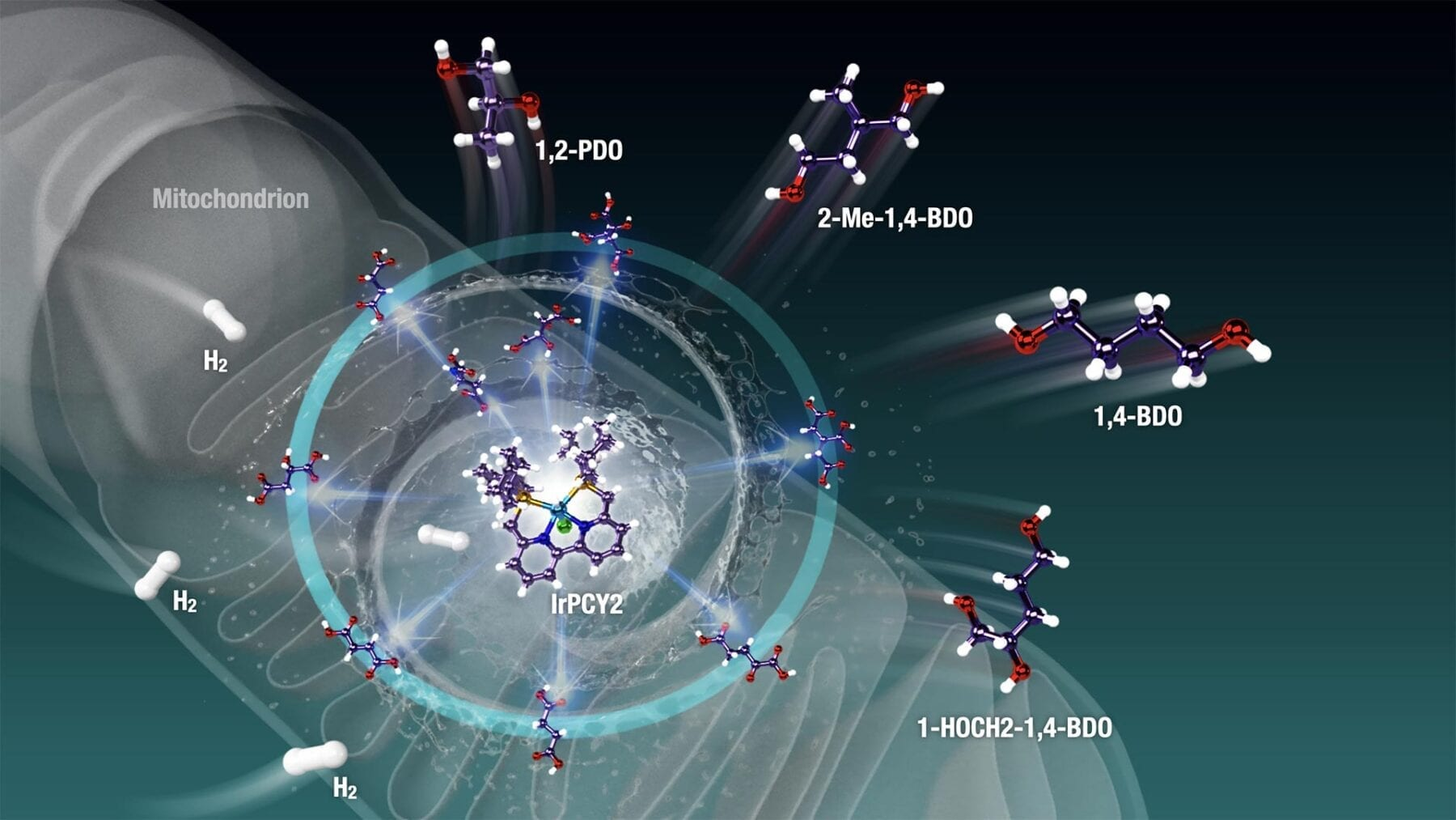 Catalyzing a zero-carbon world by harvesting energy from living cells