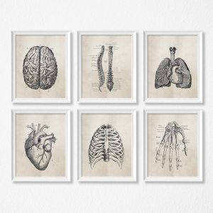 Human Anatomy Science Vintage Posters Art Prints Medical Anatomy Canvas Painting Medical Doctor Clinic Wall Pictures Innrech Market.com
