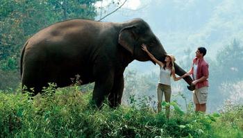 Elefanti della Thailandia