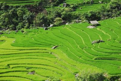 Risaie del Vietnam