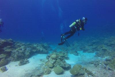 Nelle acque dell'arcipelago di Palau.