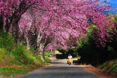 colori parco nazionale di doi inthanon