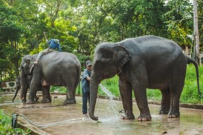 Elefanti nella riserva di Mondulkiri project