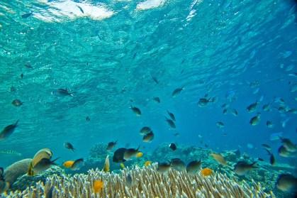 Colorati banchi di pesci tropicali a Kuda Giri