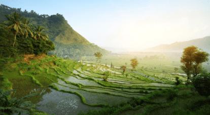 risaia a terrazza e panorama - indonesia