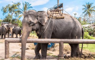 trekking a dorso d'elefante - thailandia
