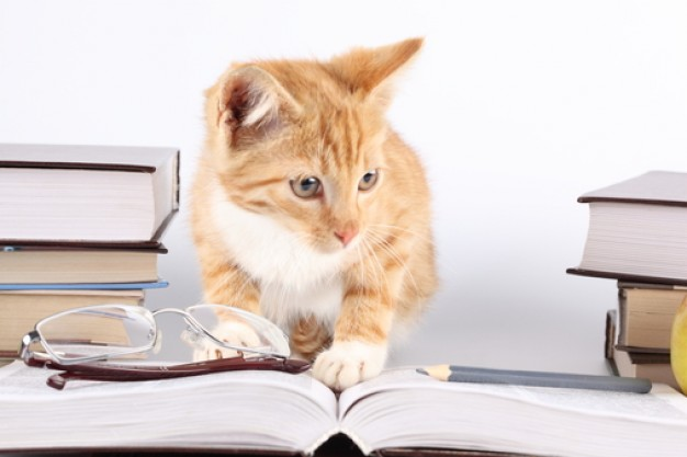 whiskers-reading-cats-lie_3214574