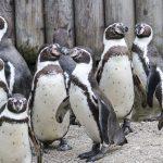 ペンギン&パンダアップデートで回復・復活する前に必要な新しい考え方(2016年版)