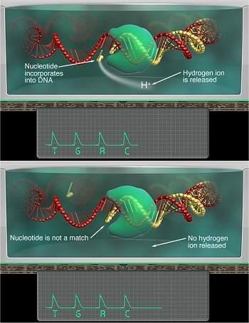 Chip sequenciador decodifica DNA próton por próton