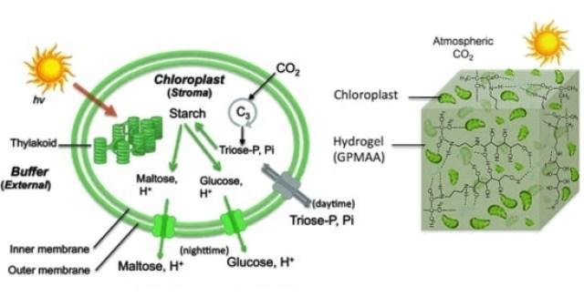 Material respira CO2 do ar e cresce como planta