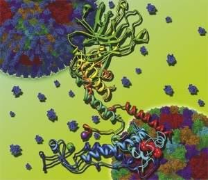 Vírus é visto em escala atômica pela primeira vez