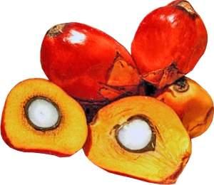 Coco de dendê
