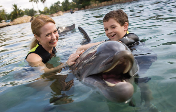 2deabbdf1d6e4c07a34dee1c10308518_dolphin-mom-and-son-large