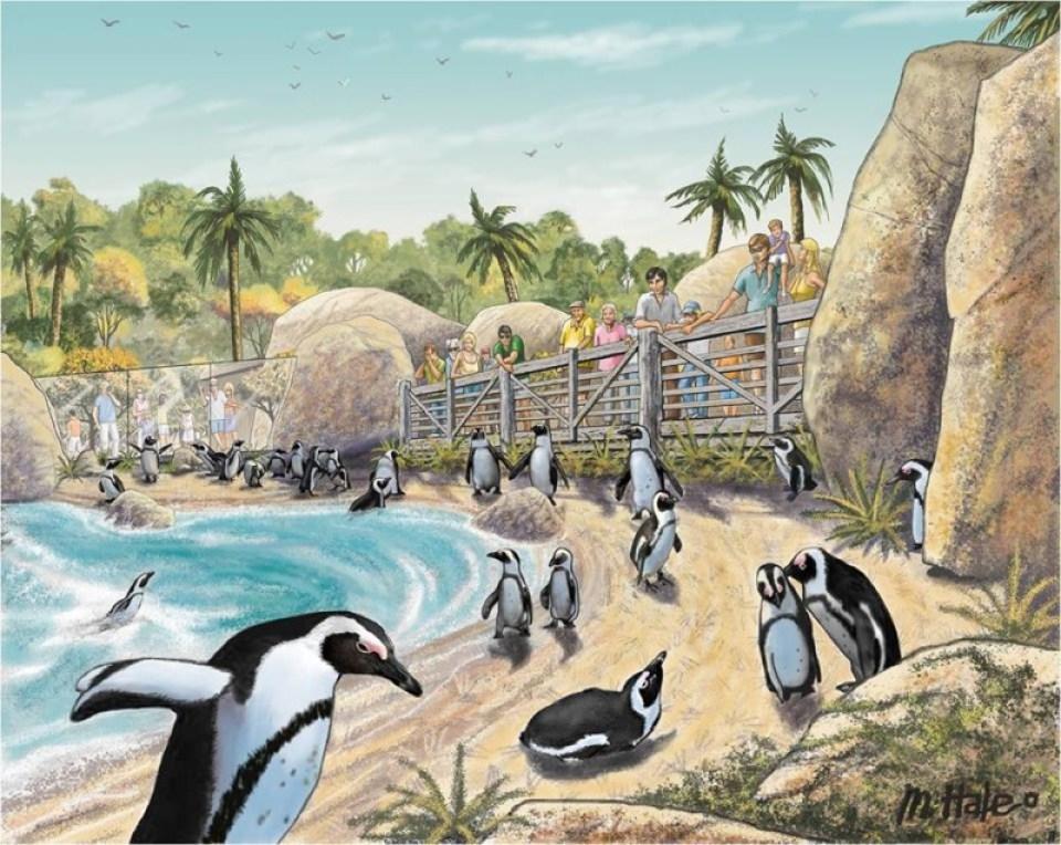 An artist's rendering of the Penguin Beach area in Conrad Prebys Africa Rocks