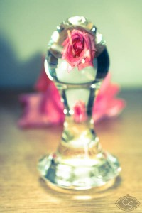rose-and-glass-8