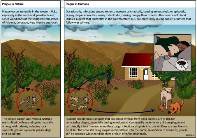Yersiania ecology CDC