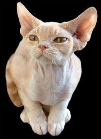Download DEVON REX