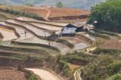 Rice terraces in Spring