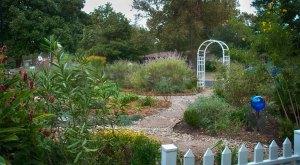 front yard butterfly garden