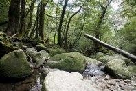 Yakushima's forest