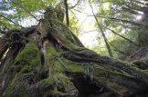 Yakushima jungles