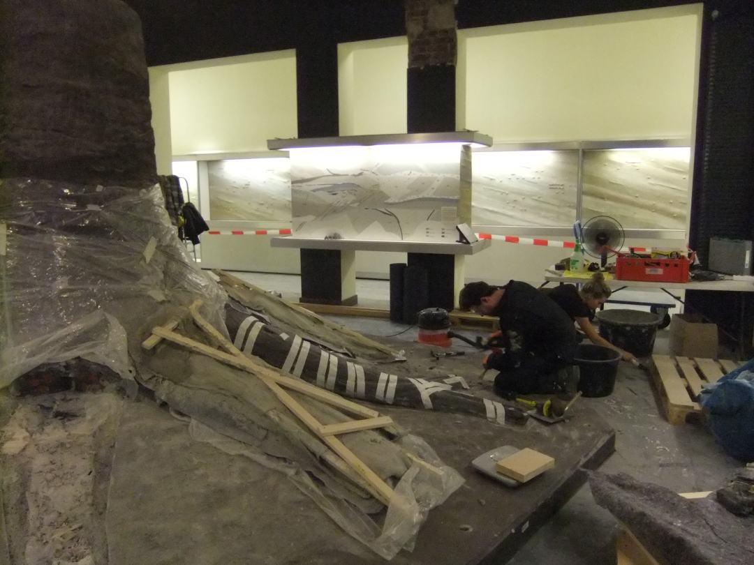 Fossielen & Dinosauriërs | Demontage Fossiele Boom II | Duitsland