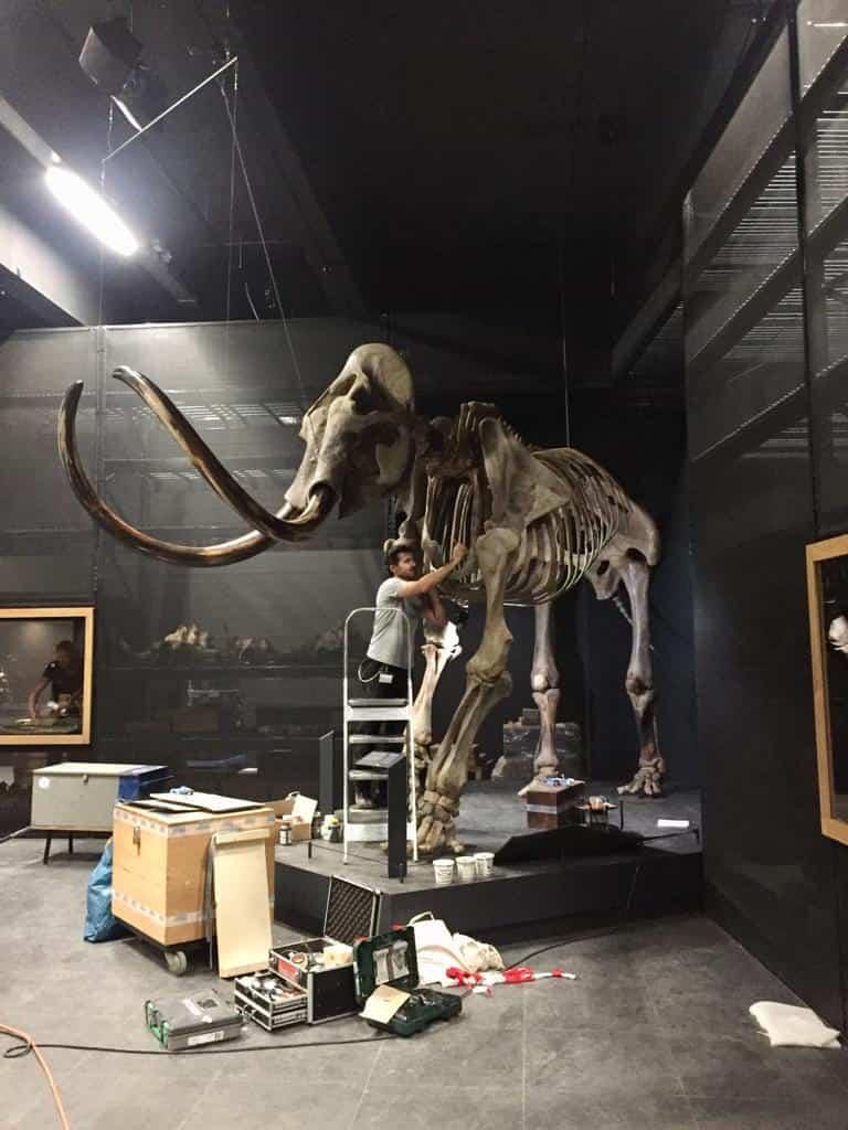 Skeletten | restauratie mammoet  | Naturalis Biodiversity Center