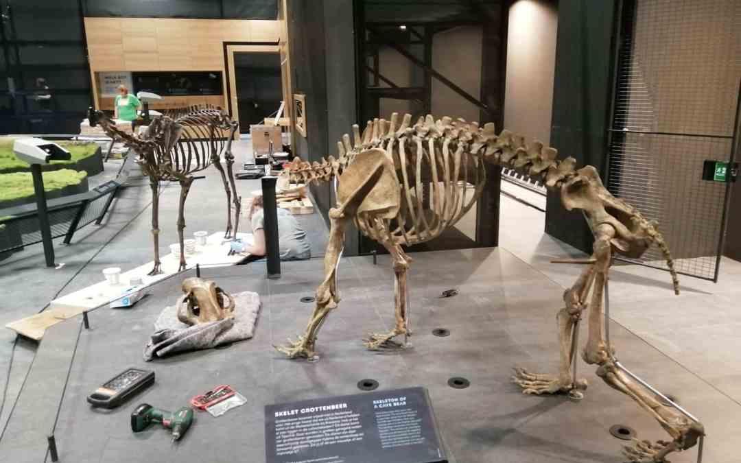 Montage edelhert en holenbeer   Naturalis Biodiversity Center