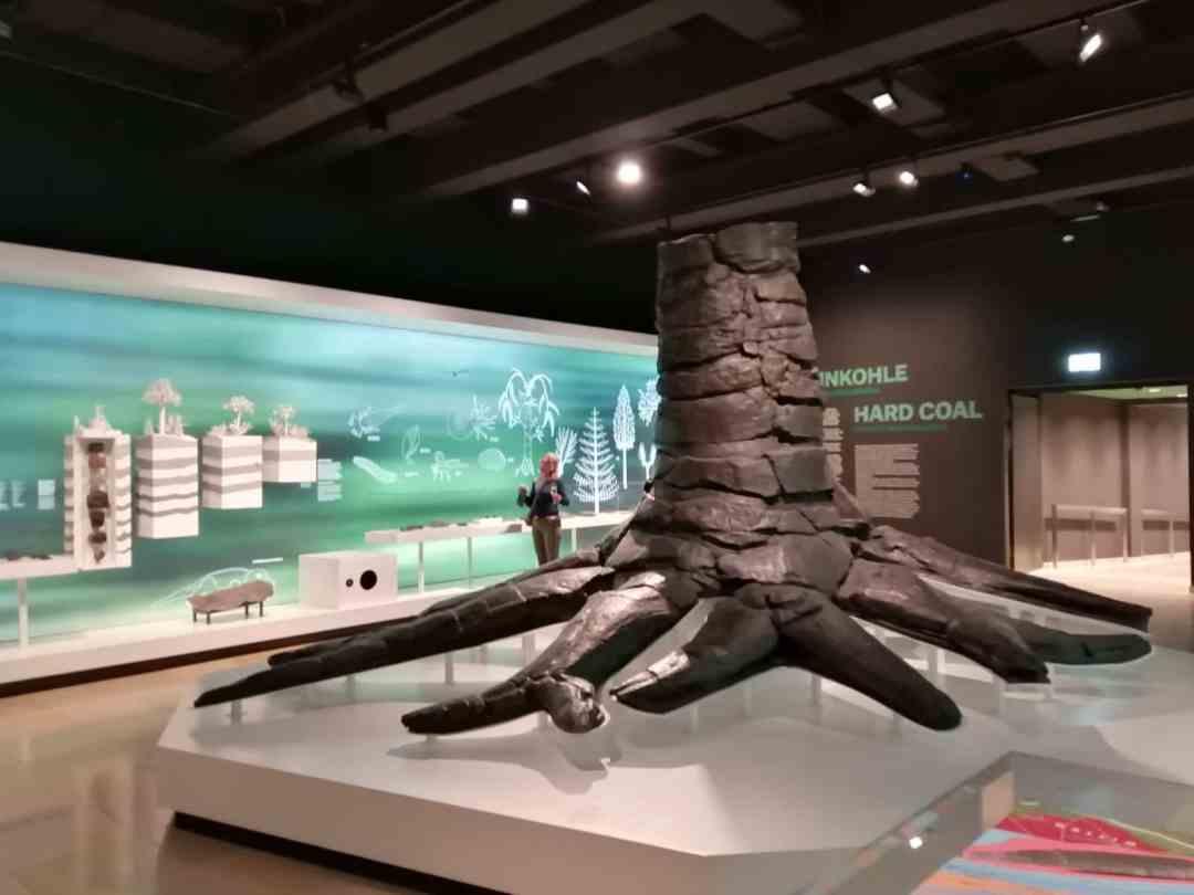 Fossielen & Dinosauriërs | oplevering geheel gerestaureerde Fossiele Boom in nieuwe opstelling | Bergbaumuseum Bochum, Duitsland
