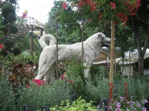 ... and I wasn't expecting to see a giant Kangal!