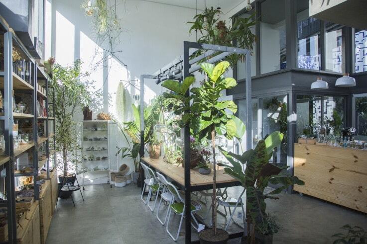 Flo Botanica - Brazil Retail