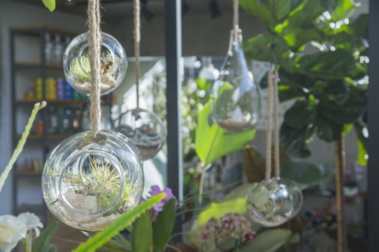 Flo Botanica - Botanical Retail