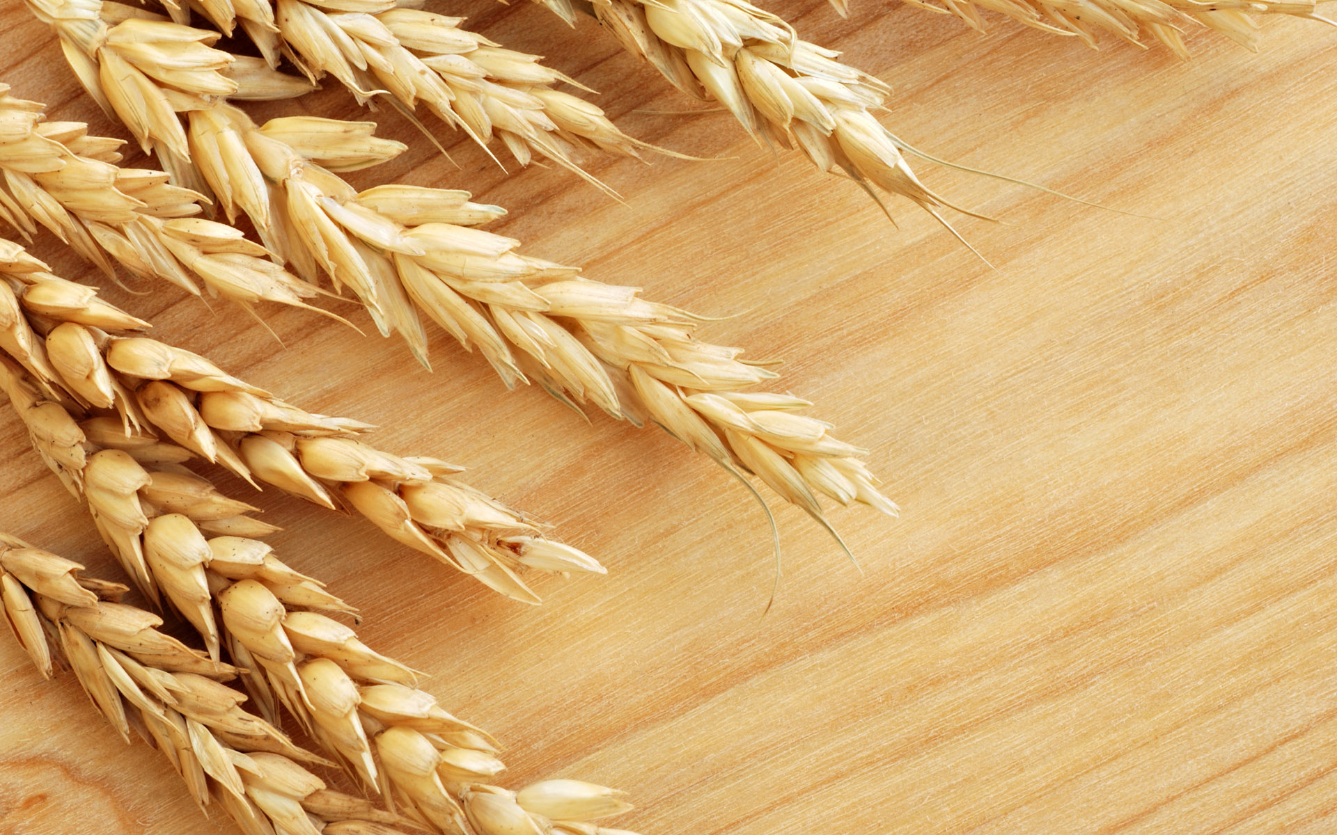 Why is Wheat Controversial? Exploring Gluten and Digestion