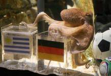 Paul the Octopus - InsideSport