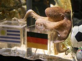 Paul the Octopus - InsideSport