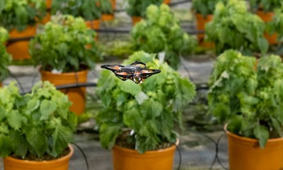 Drones vs hungry moths Dutch use hi-tech to protect crops