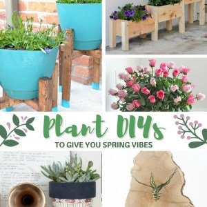 Plant DIYs to Get Those Spring Vibes