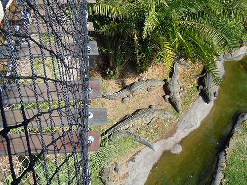 Wild Africa Trek rope bridge with crocodiles