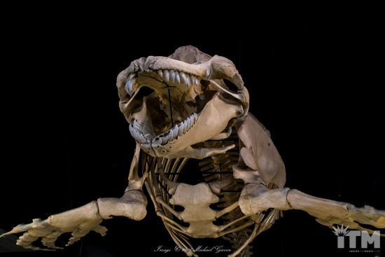 skeletons-animals-unveiled-1