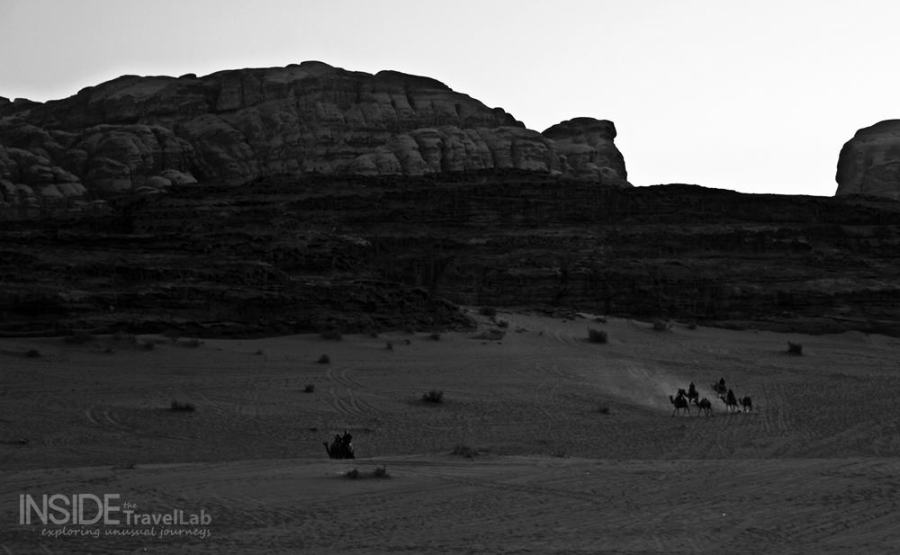 Wadi Rum Desert at Night Camels