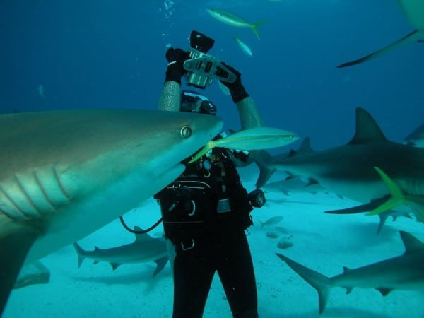 Shark photographer in action