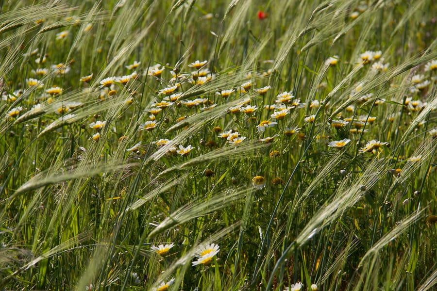 Grass at Menorca UNESCO world heritage site from @insidetravellab