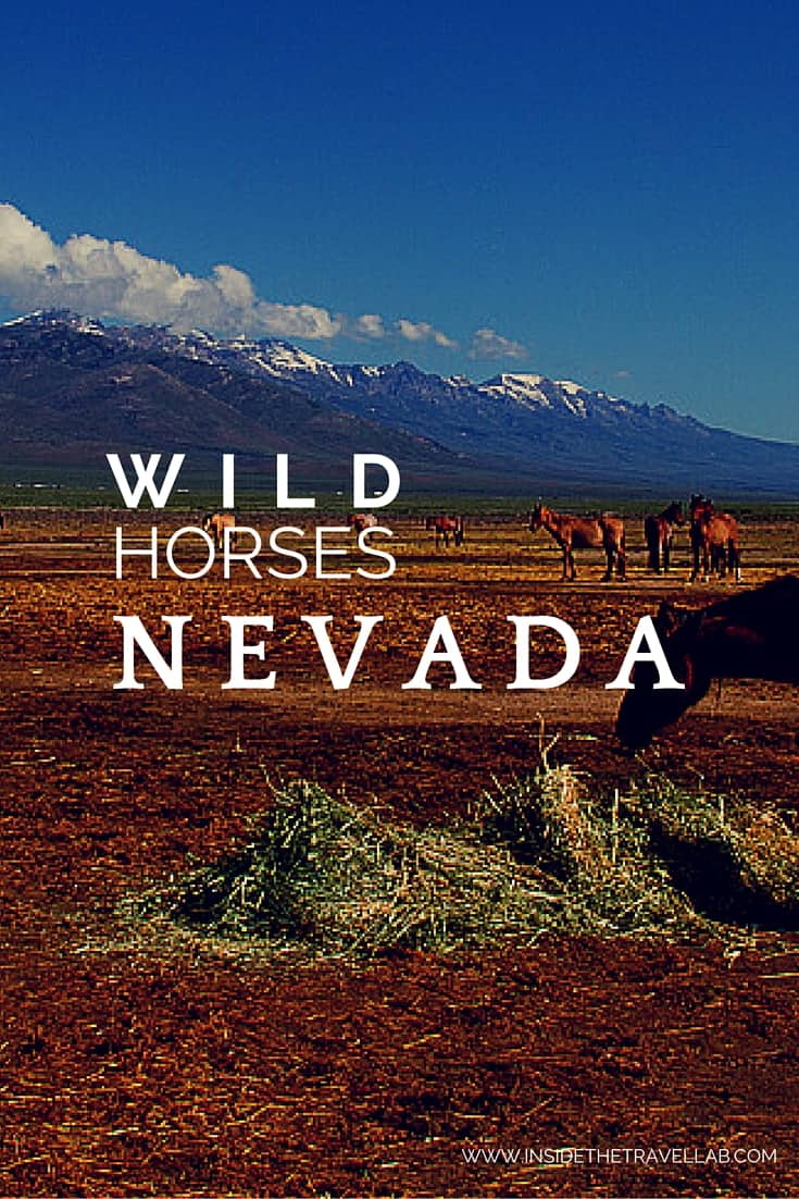 The wild horses of Nevada at Mustang Monument via @insidetravellab