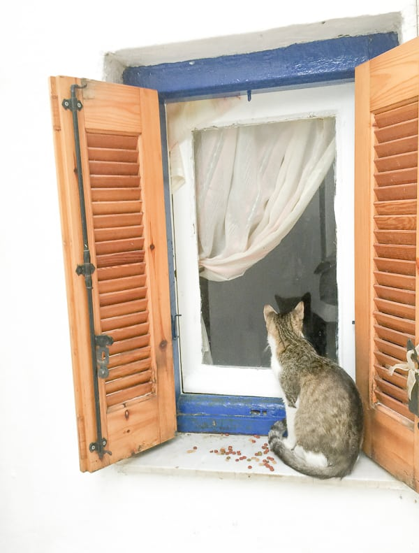 Cat in Anafiotika Athens