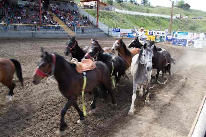 Horses at the Williams Lake Stampede