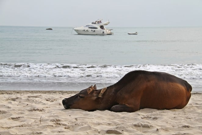 The real highlight for me at High Tide Restaurant at Lantau Island, was when the wild buffalo wandered past and had a snooze on the beach as the sun was setting. One of the best places to eat in Hong Kong.