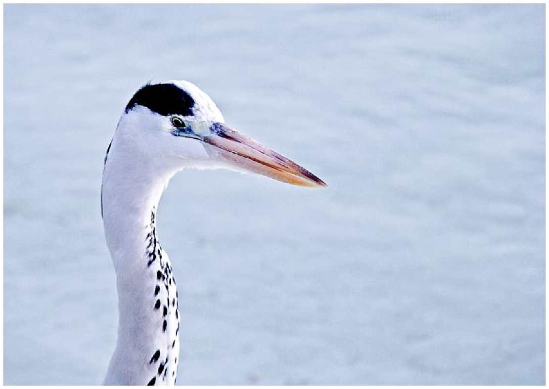 Wildlife in the Maldives bird