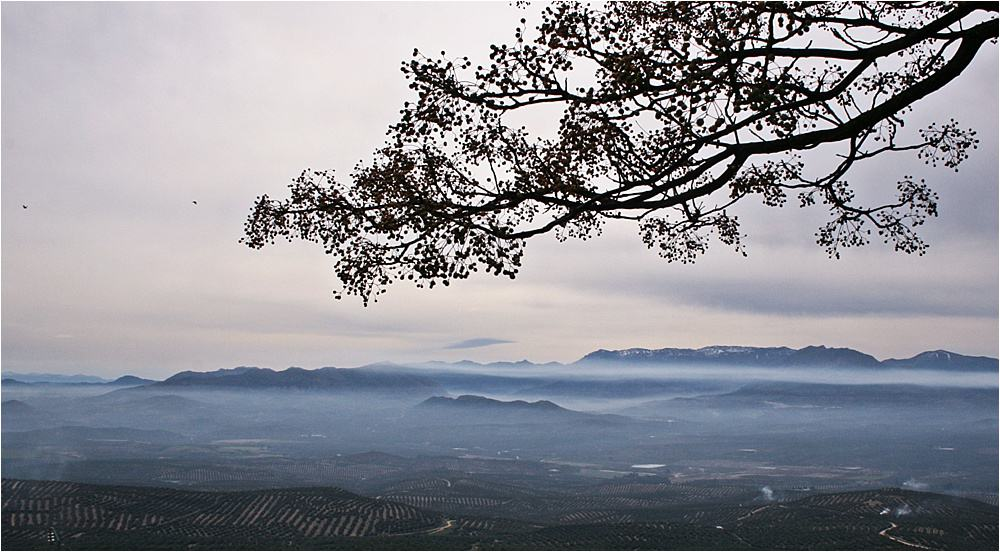 Scenic view from Pegalajar during the Olive Harvest - en route to picking olives
