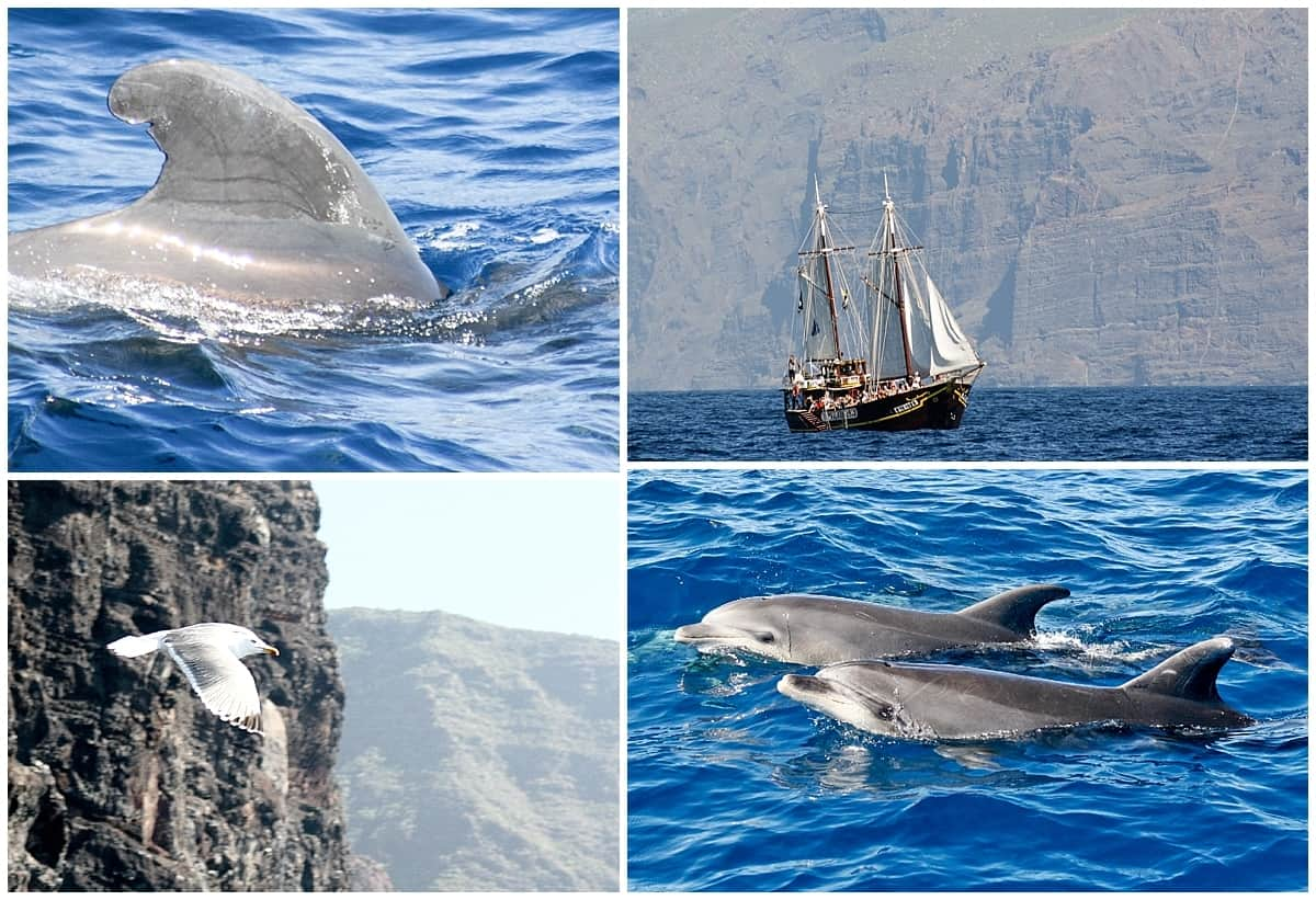 Whale watching in Tenerife and looking for dolphins