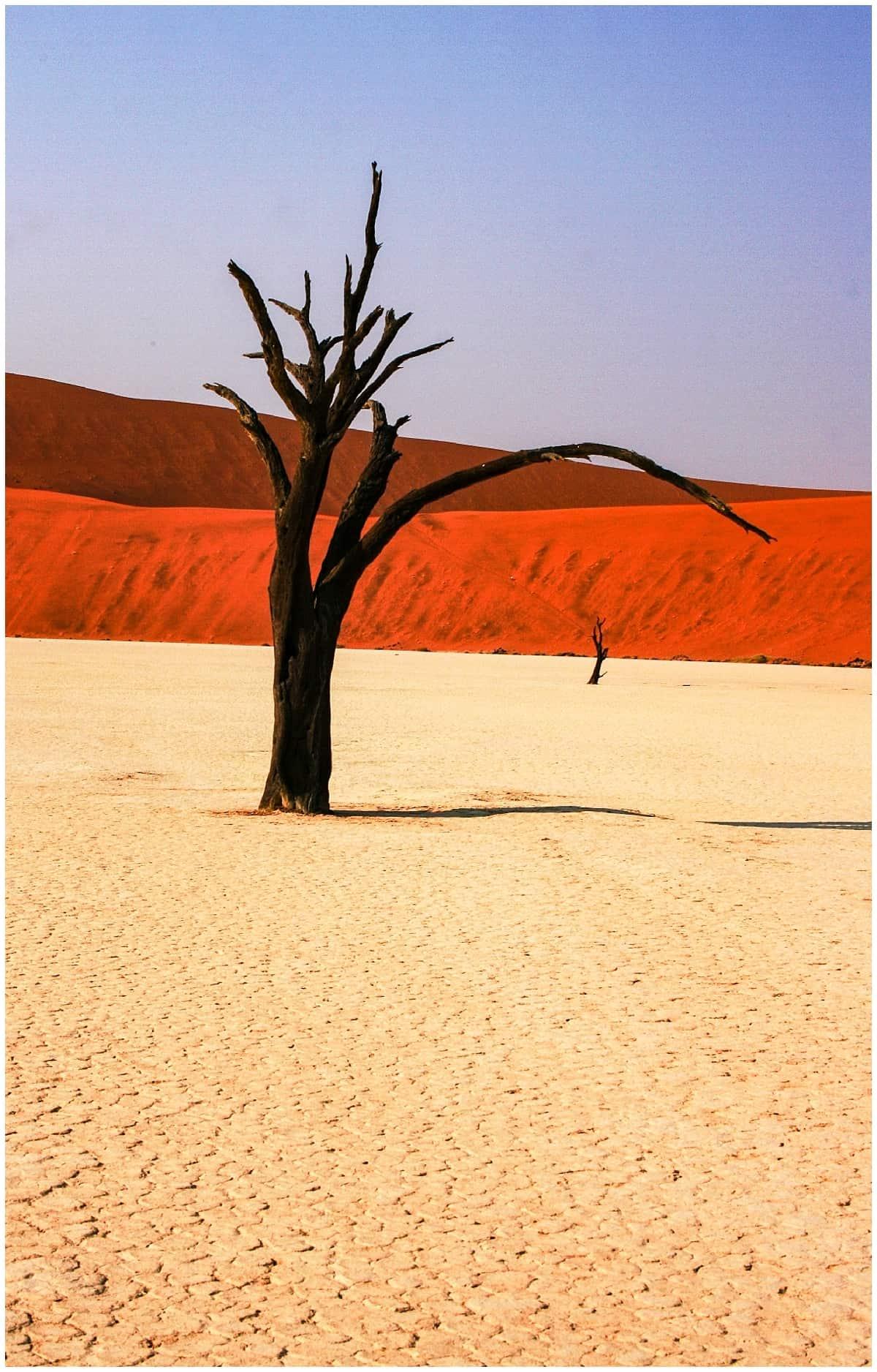 Dead trees in the Namib desert